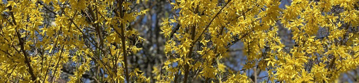 Bäume in Blüte